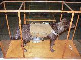 Building Demolition Dog